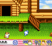 ������ ���� Hamster Paradise Advanchu